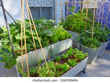 Raised bed orchard urban garden metal table