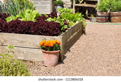 Raised bed of salad crops in English cottage garden