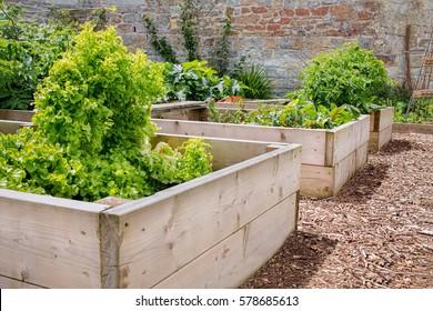 Raised Bed Vegetable & Flower Garden