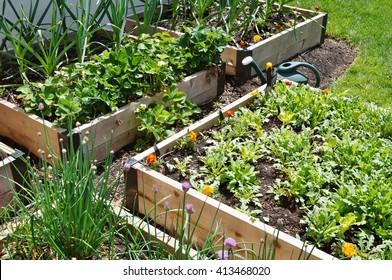 Raised bed vegetable garden box in spring