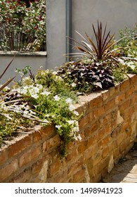 Raised flower bed with perennials, plants on a brick wall, colorful flowers and succulents