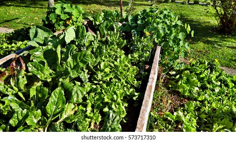 Raised garden bed with mixed vegetables