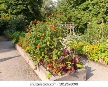 Raised Garden beds in community garden