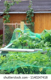 Raised herbs beds with fresh chard and various other vegetables, protected by a Bird and Insect Netting.