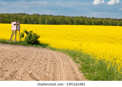 Raised hide or raised blind among yellow fields, flowers of rape, colza, cole. Agriculture, spring in Poland.