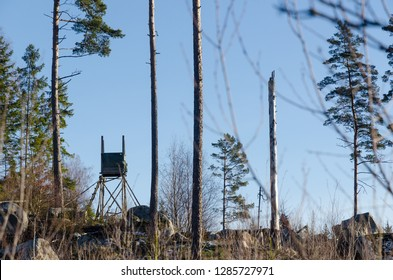 Raised hunting tower in a bright woodland with tall tree trunks