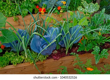 Raised vegetable container with selection of vegetables and flowers in an allotment garden