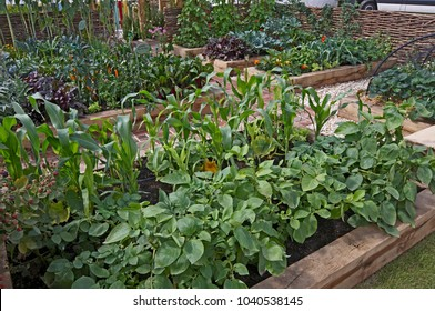 Raised vegetable wooden containers with selection of vegetablesin an allotment garden