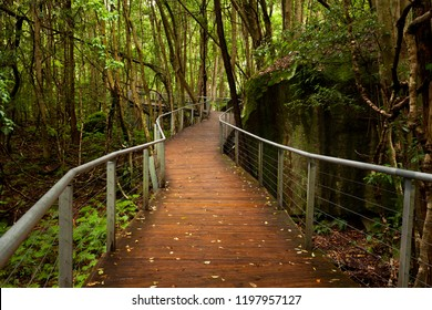 Raised walkway in rainforest floor near Katoomba in New South Wales, Australia near Syndey