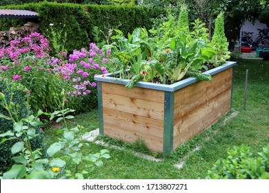 Raised-bed gardening, garden with a wooden raised-bed planted with vegetables and lettuce
