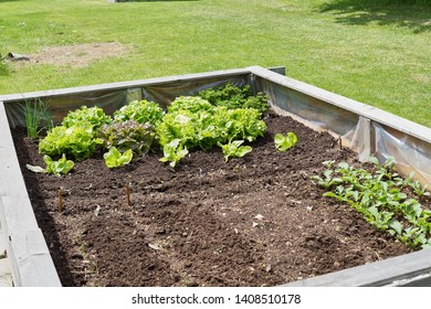 Raised-bed gardening with jung plants