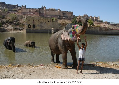 RAJASTAHN, INDIA - MARCH 03, 2006: Bathing elephants in front of the Amber Fort, Jaipur