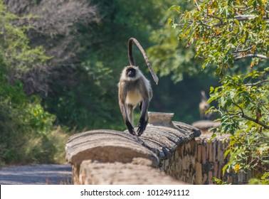 National Bird of Pakistan Images, Stock Photos & Vectors