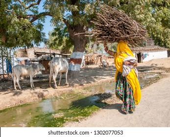 RAJASTHAN, INDIA - FEBRUARY 3, 2011: Rajasthani woman carries a heavy load of wooden sticks and branches on her head. Rajasthani people are known as some of the most colorful people in India.