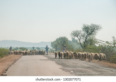 RAJASTHAN, INDIA - FEBRUARY 3, 2011: Shepherds herd sheep on a country road in Rajasthan. It is the largest Indian state by area.