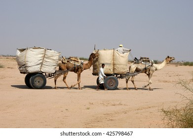 RAJASTHAN, INDIA - MARCH 03, 2006: Carts pulled by camels in the desert areas of Rajasthan