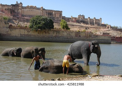RAJASTHAN, INDIA - MARCH 03, 2006: Bathing elephants in front of the Amber Fort , after a long day of work