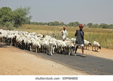 RAJASTHAN, INDIA - MARCH 14, 2006: Shepherds with flocks of sheep, traveling on a road in the region