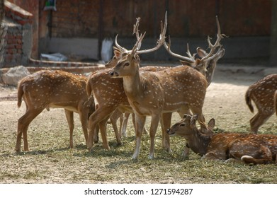Rajasthan, India - March 24, 2006: Image with selective focus of a group of deer at the zoo in Jaipur