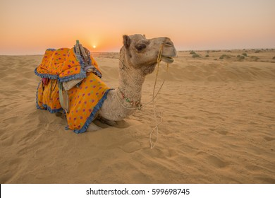Rajasthan travel background - Indian camel (camel drivers) with camels in dunes of Thar desert on sunset. Jaisalmer, Rajasthan, India