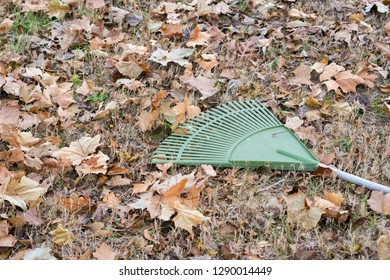 Rake laying on ground near Fall / Autumn leaves  ready to be racked