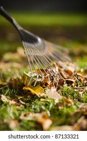 rake raking autumn leafs in the garden