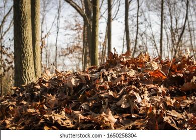 Raked piles of brown dried leaves in a yard.