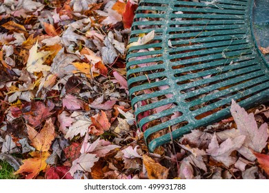 Raking Leaves.