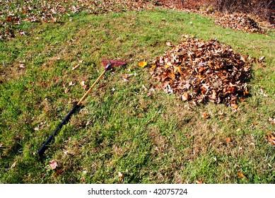 raking leaves in the backyard