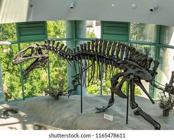 Raleigh, North Carolina / USA - Aug 25 2018: Acrocanthosaurus skeleton