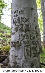 Ralsko, Czech republic - May 26 2019: Signatures of Soviet soldies carved into tree bark shortly after the invasion of Czechoslovakia in 1968. The area of Ralsko was used as a military range.