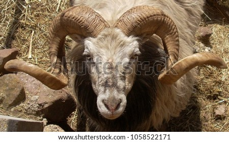 A ram head with