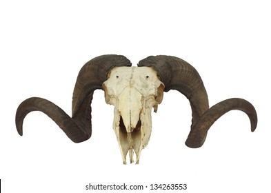 ram skull with big horn isolated on white background