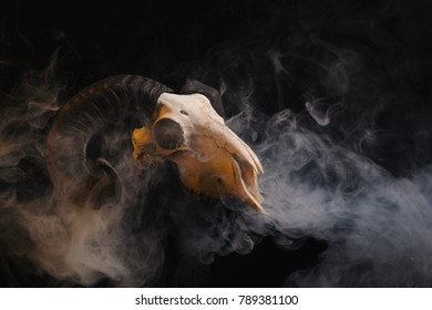 Ram skull with horns on smoky background, Halloween theme