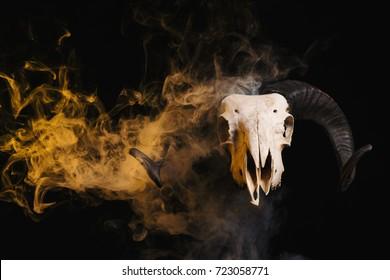 Ram skull with horns and yellow smoke, Halloween theme