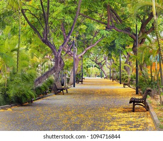 """A """"Rambla"""" in Puerto de la Cruz on tenerife in spring. Broad walkway planted with trees on both sides with wooden benches. a carpet of flowers on the way."""