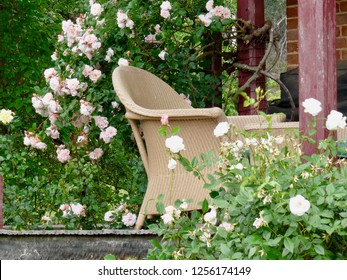 Rambling Rose with Cane Chair