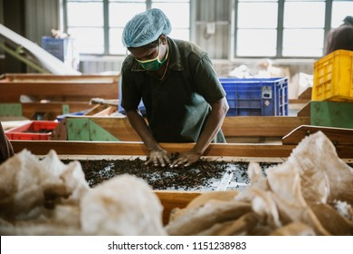 Ramboda - Central Province, Sri Lanka - June 19 2018: Unidentified Sri Lankan women working in a tea factory.  Sri Lanka's tea industry plays a very important role in the economy of the country.