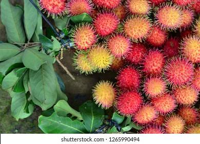 RAMBUTAN FRUITS - HAIR FRUITS
