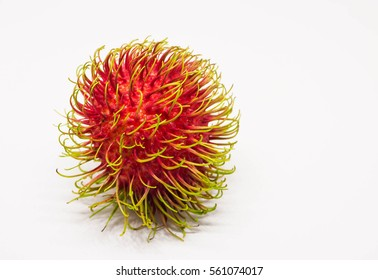 Rambutan (Nephelium lappaceum) is a medium-sized tropical tree in the family Sapindaceae and the fruits is edible. Rambutan is native to the Malay-Indonesian region and other tropical Southeast Asia