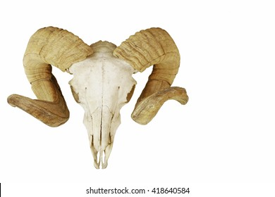 Ram's skull with large horns