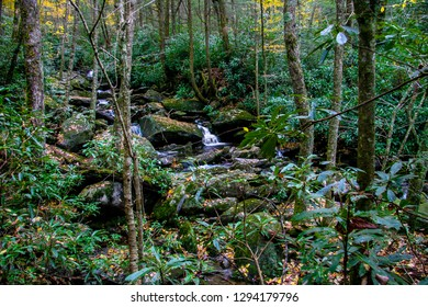 The Ramsey Cascades area in the Great Smoky Mountains NP near Gatlinburg, TN has numerous tiny waterfalls gliding over the boulders in this beautiful forest filled with rhododendron and fallen leaves.