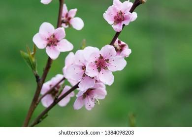 ramuri cu flori de primavara, lumina, natura, culoare
