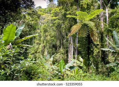 Ranamafana rainforest - Madagascar