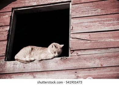 Ranch cat