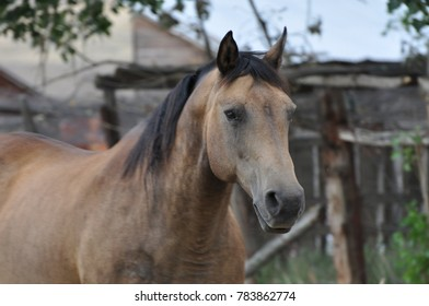 Ranch horse on the farm.