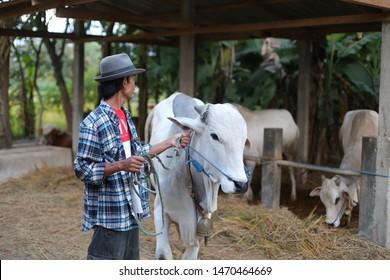 rancher cows holding head animal. yogyakata indonesia. august 5, 2019.
