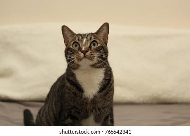 random cat expressions