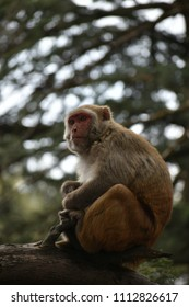 random click of a monkey in Kasauli uttrakhand