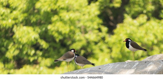 Bird Sanctuary Images, Stock Photos & Vectors | Shutterstock
